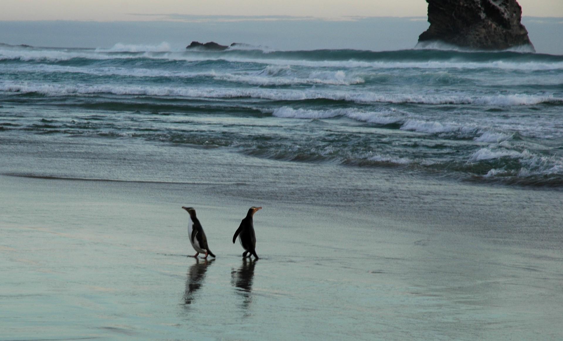 pingoins02