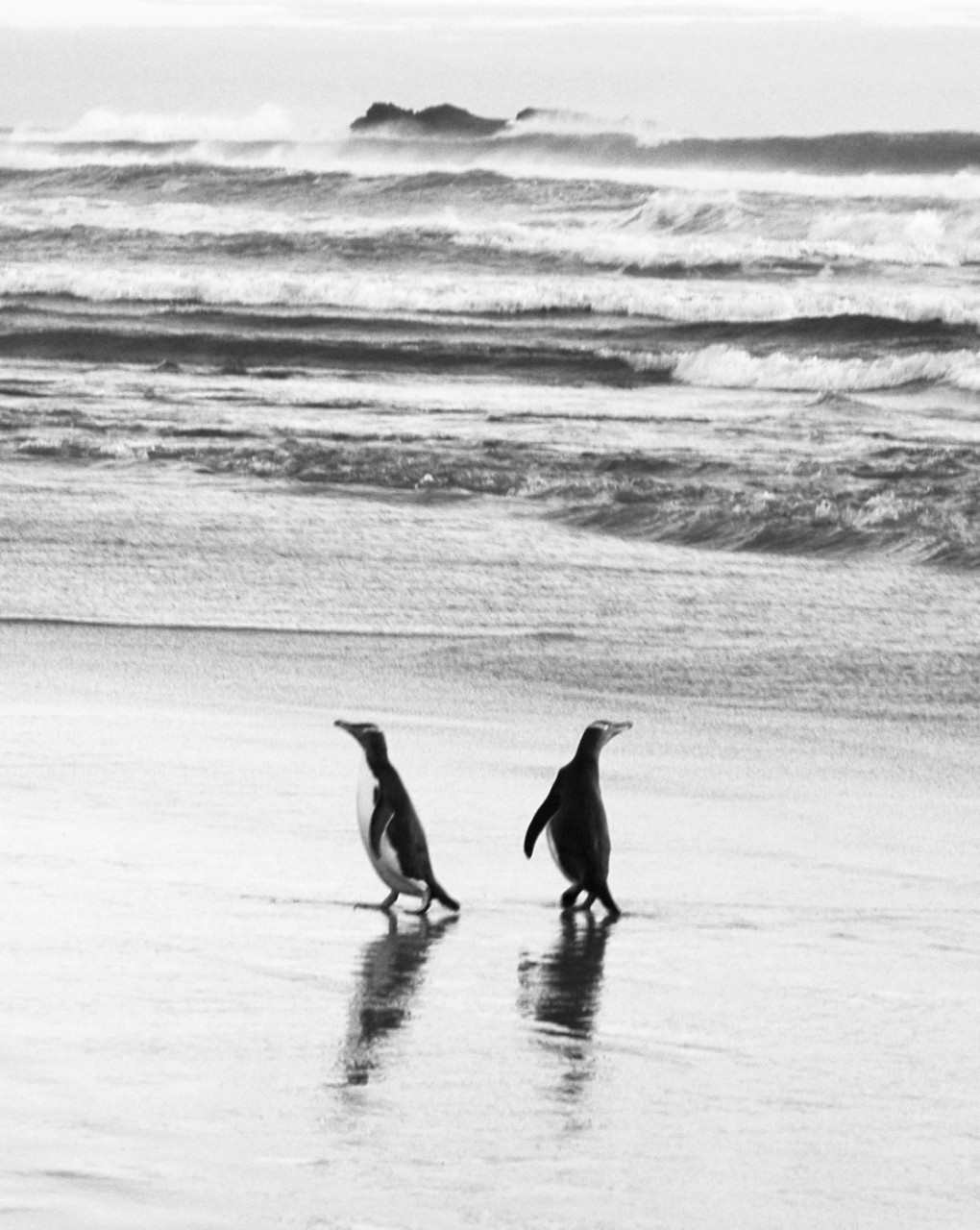 pingoins05